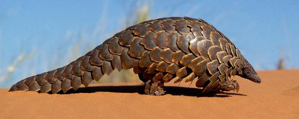 pangolin-ARTICLE-PAGE